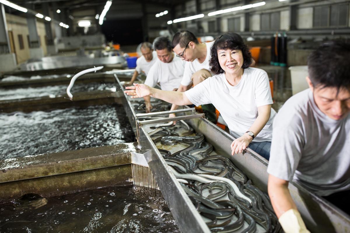 郭瓊英本身就是選鰻師,練就1秒目視重量、抓魚分類的真功夫。
