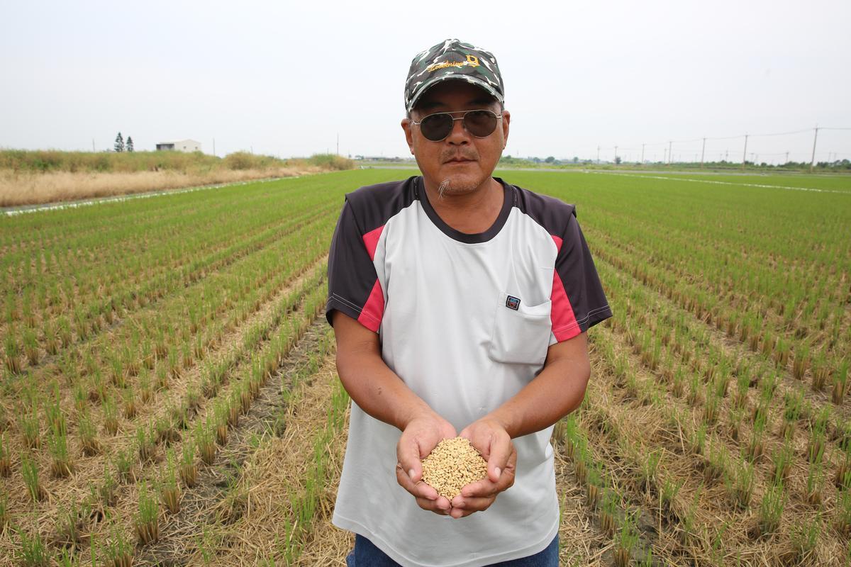 養了3年的無毒田卻遭底渣汙染,讓農民難以接受。