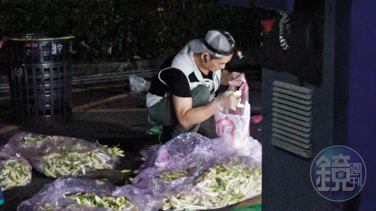 冰鎮玉蘭花凌晨抵達台北分貨,大量的花堆成一座小山。