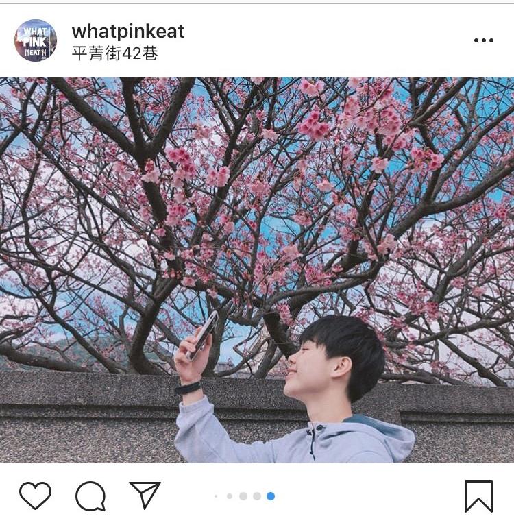 「平菁街42巷」迷人的櫻花景緻,不管怎麼拍都好看。圖:翻攝自instagram whatpinkeat/開放權限