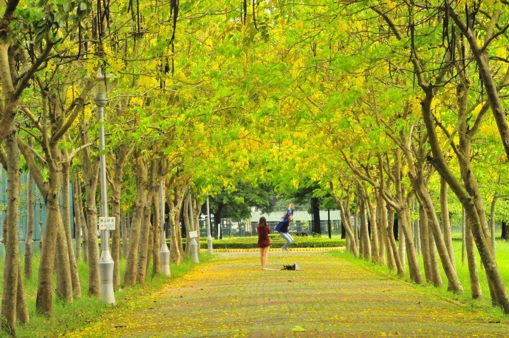 虎頭埤風景區每到阿勃勒花季總吸引大量遊客入園,欣賞花季限定景致。圖:台南旅遊網/提供