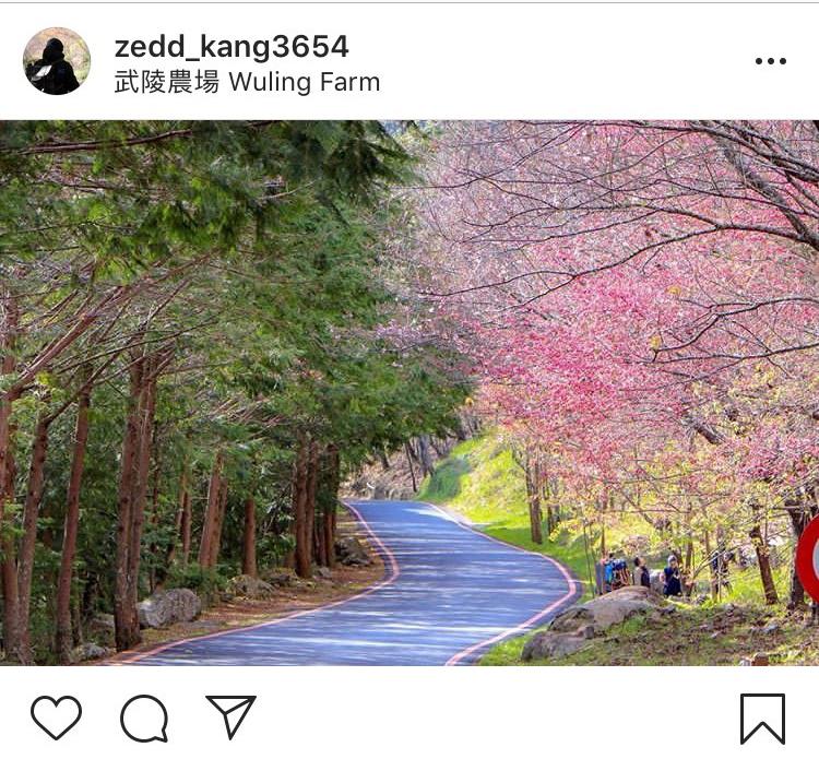 「武陵農場」由中谷向南谷、北谷延伸約3公里的賞櫻步道,是看櫻花的好所在。圖:翻攝自instagram zedd_kang3654/開放權限