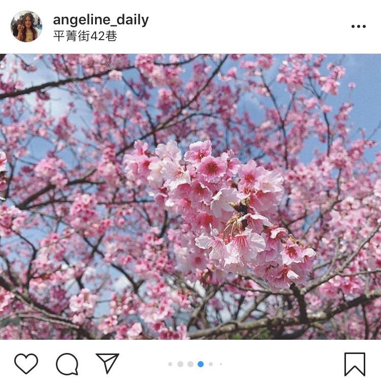 「平菁街42巷」的櫻花美景,吸引許多攝影迷前往拍攝。圖:翻攝自instagram angeline_daily/開放權限