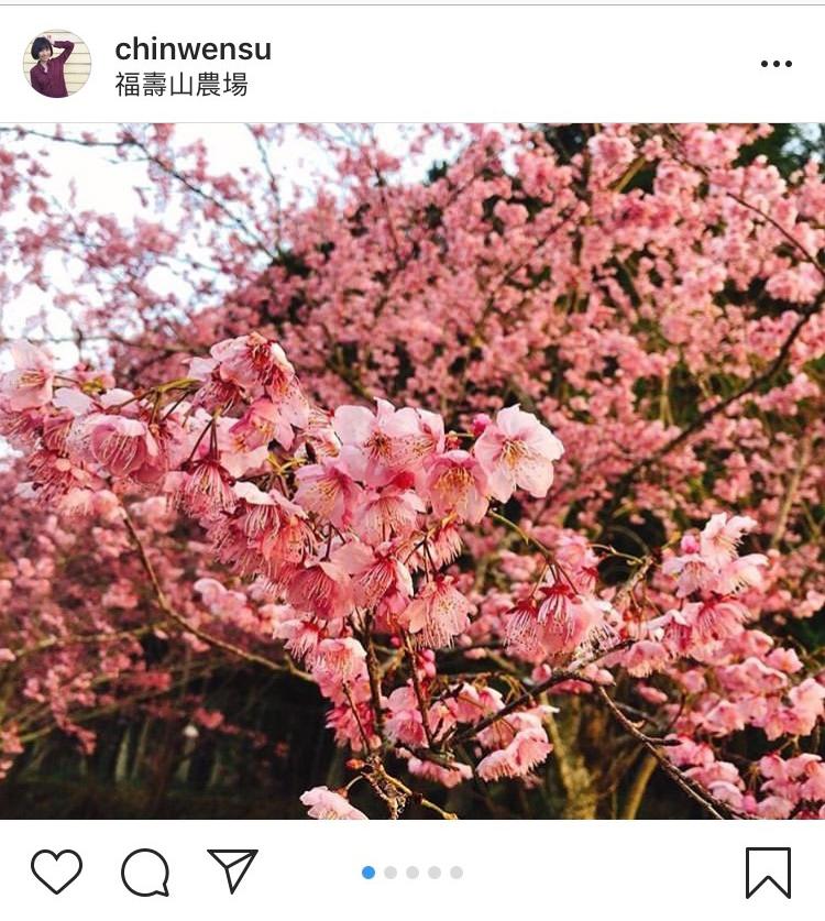 目前「福壽山農場」千櫻園內的富士櫻與昭和櫻都已經盛開囉!圖:翻攝自instagram chinwensu/開放權限