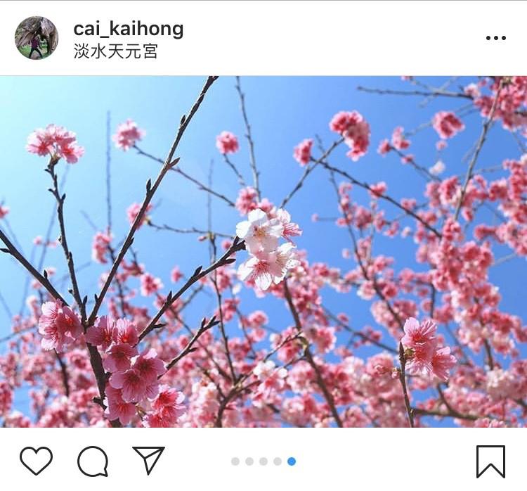 「無極天元宮」是近年來淡水的賞櫻勝地。圖:翻攝自instagram cai_kaihong/開放權限