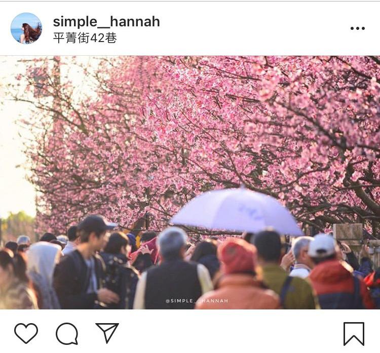 「平菁街42巷」花團錦簇的櫻花美景,不只浪漫也超迷人。圖:翻攝自instagram simple__hannah/開放權限