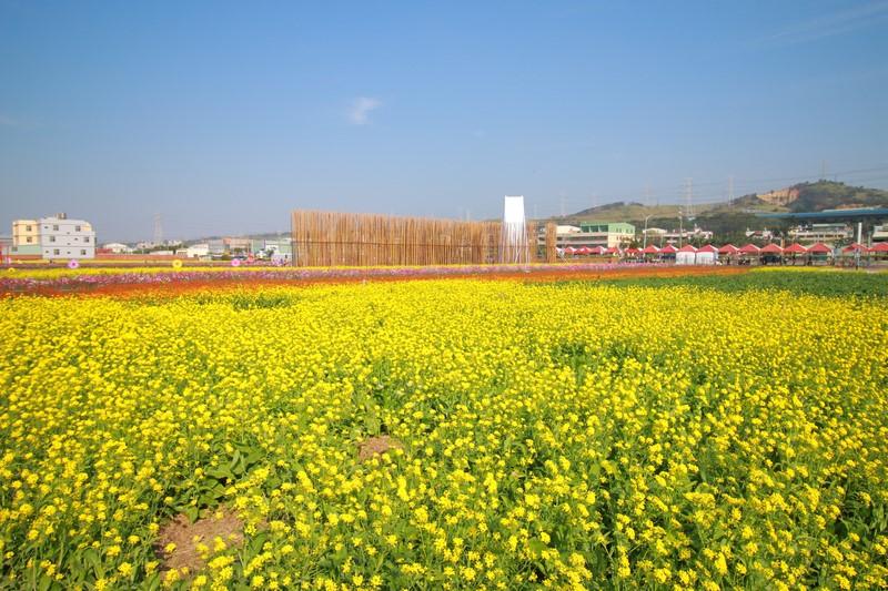 台中》今年的第一波花海在龍井~來一趟幸福的花田之旅