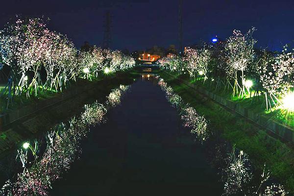 羅莊櫻花步道 (圖/宜蘭羅莊櫻花步道)