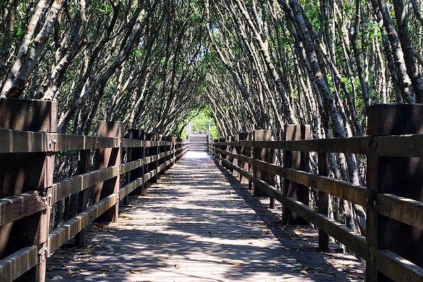 新竹紅毛港的紅樹林遊憩區沿途設有完善的步道 (圖/spark._jian)