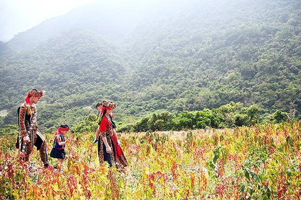 金峰歷坵部落紅藜