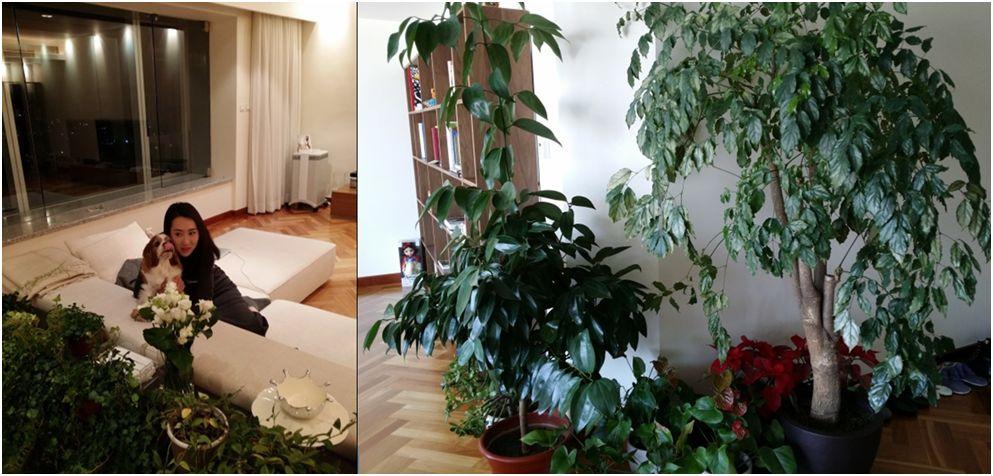 王怡人平日也涉獵室內設計,並嚮往綠意盎然的居家風格。