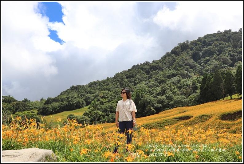 赤柯山金針花(小瑞士農場)-2018-08-31.jpg