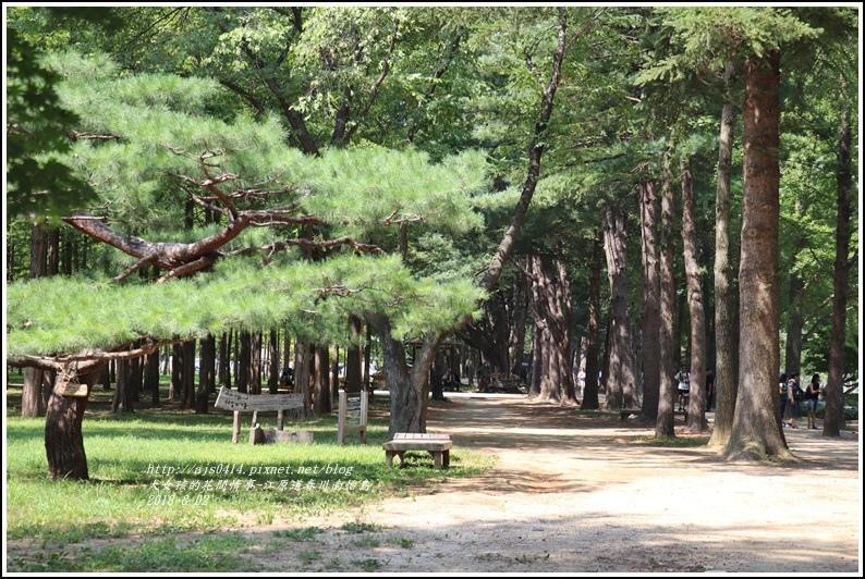 江原道春川市南怡島-2018-08-30.jpg