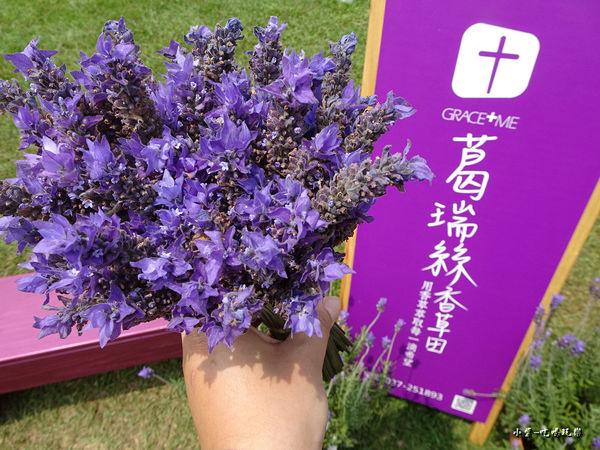 葛瑞絲香草田56.jpg
