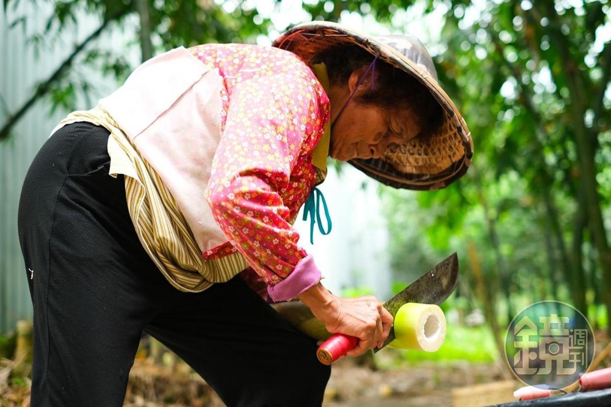 阿嬤熟練地進行麻竹筍剝殼處理。