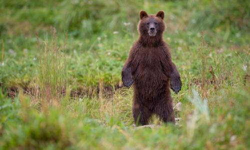 US government issues bear advice: friends dont let friends get eaten