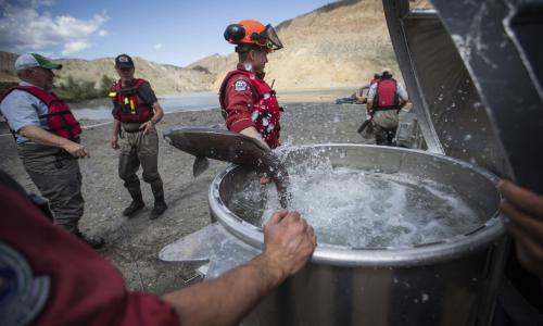 Canada: workers race to free millions of salmon trapped after huge landslide