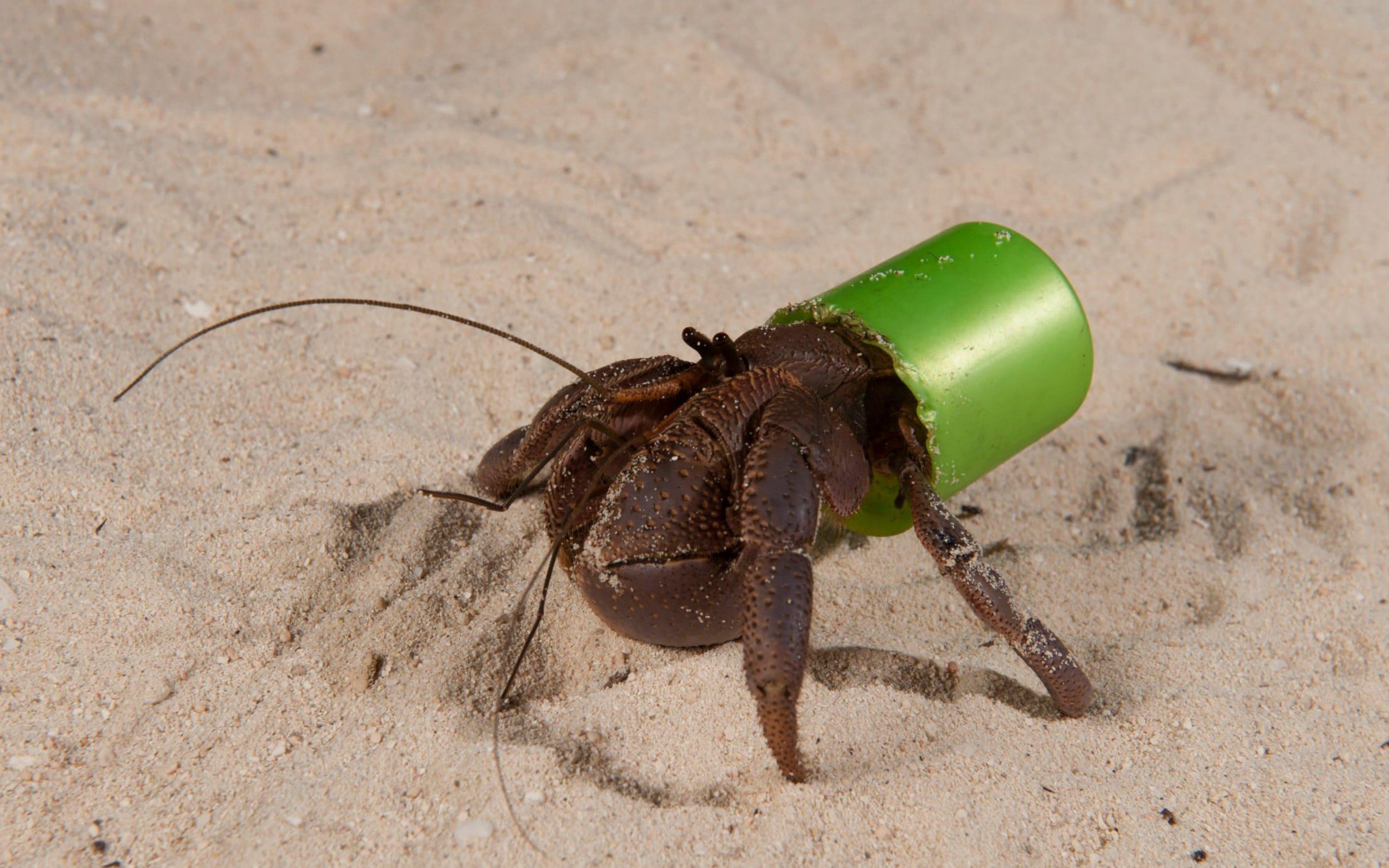View Jack Nicholson Crab Images