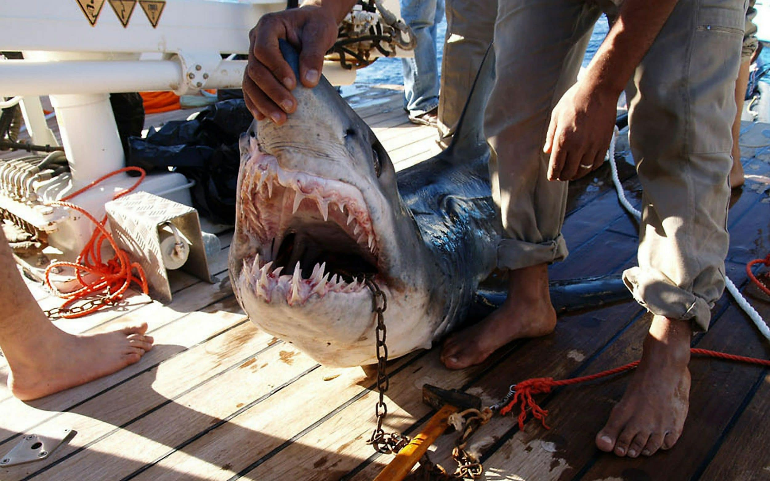Tourist, 12, and guide lose limbs in shark attack atSharmEl-Sheikh