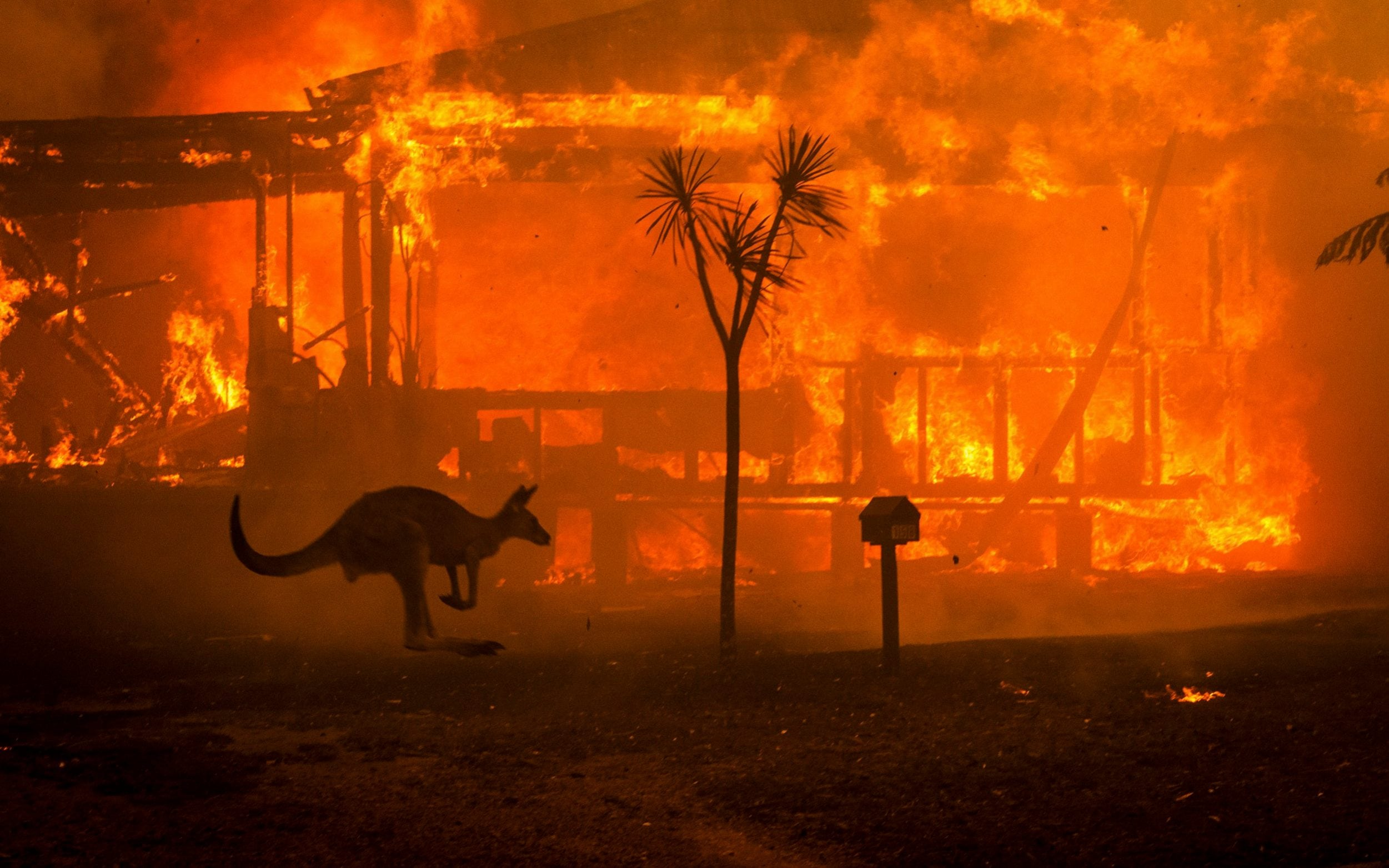 Australian bushfires: Military deployed to help devastated communities as death toll rises