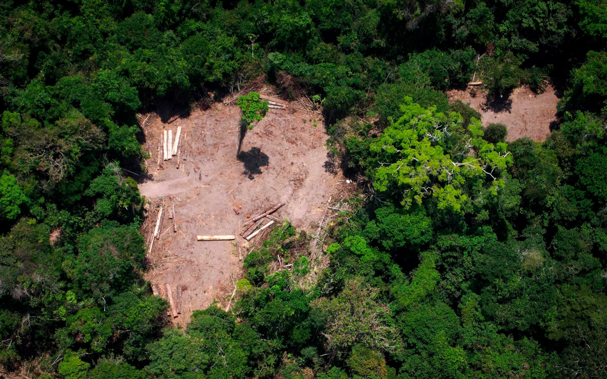 Brazilian official who protects Amazon indigenous tribes shot dead