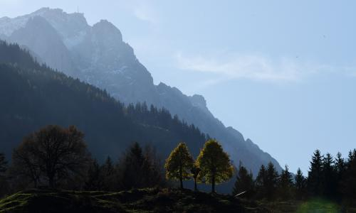 Two trees in front of the Zugspitze mounatin peak