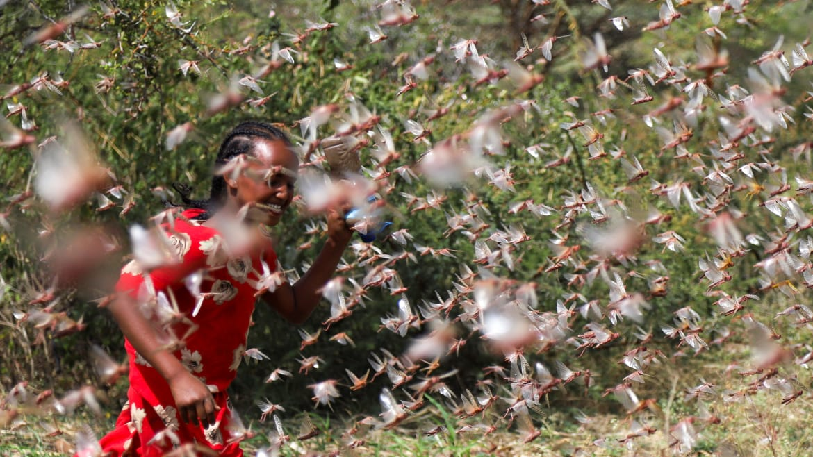Locusts Could be the Next Plague to Hit China