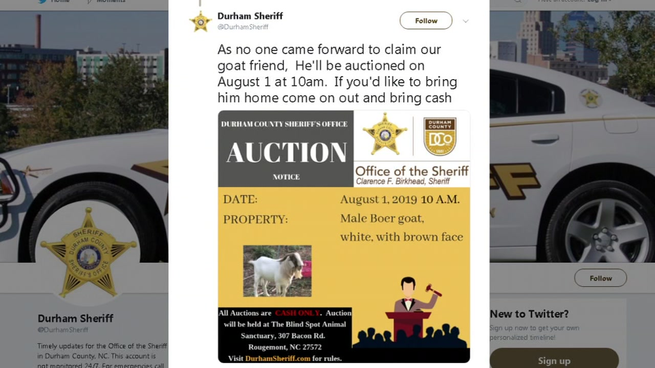Lost Durham goat to be sold at auction