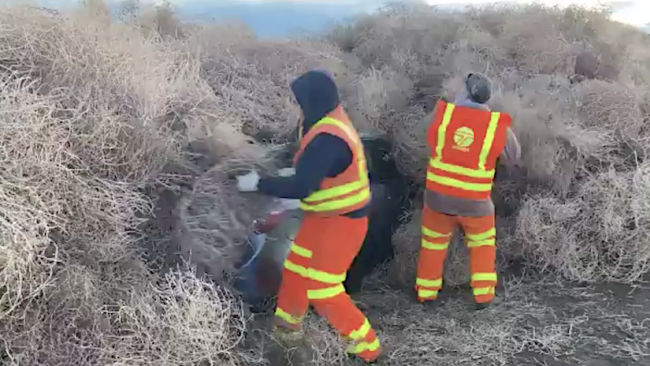 Highway workers make astonishing find amid epic pile of wind-blown tumbleweeds
