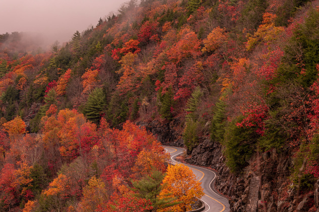 Forecaster Explains Why We See Vibrant Red Purple Fall Leaves And Sometimes Don T