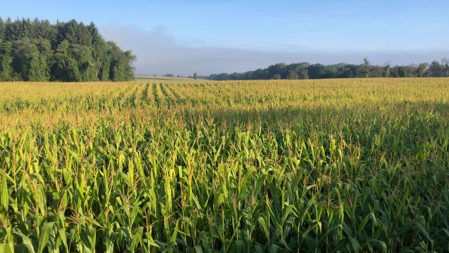 AccuWeathers latest analysis predicts a poor 2019 yield for corn and soybeans