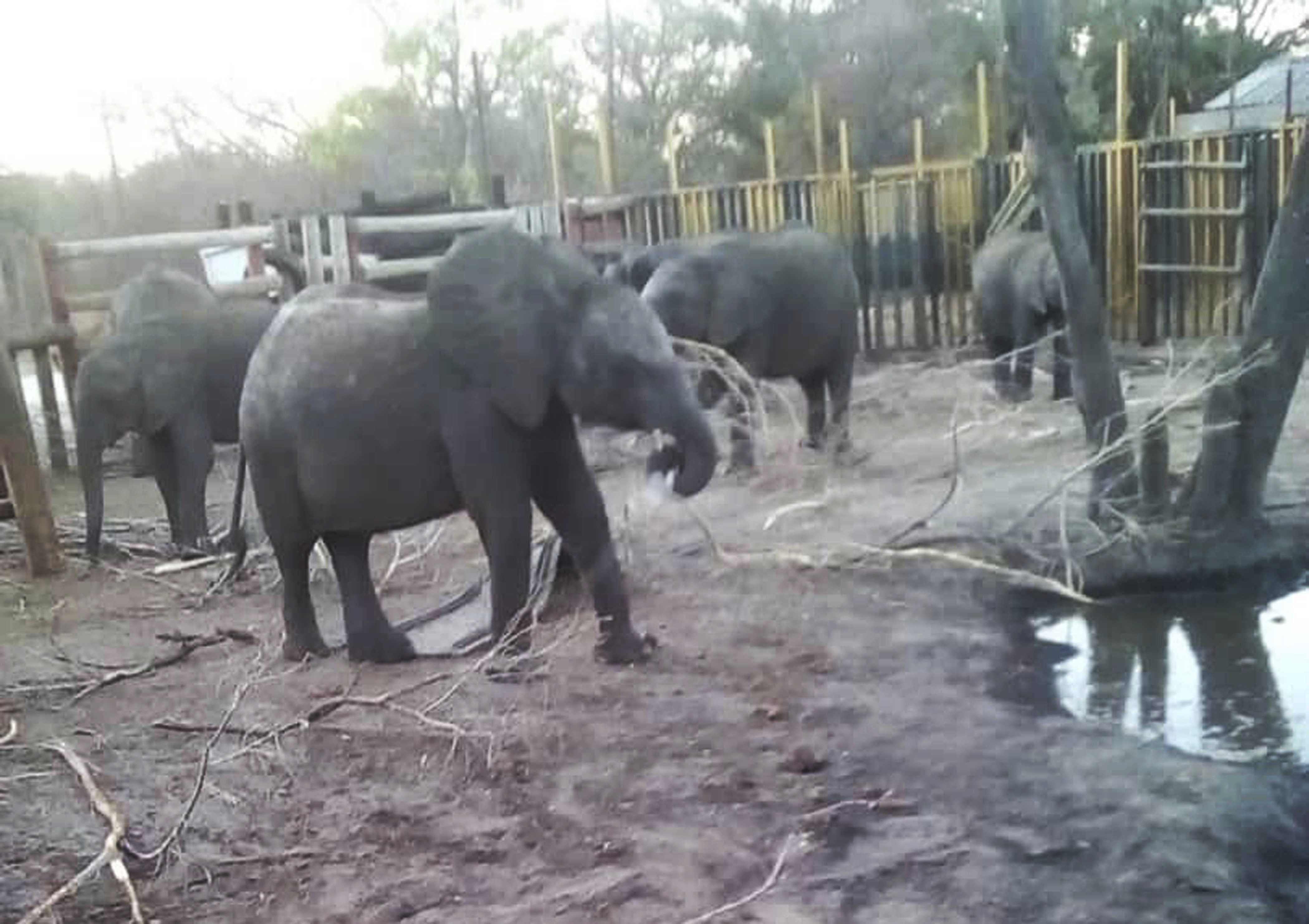 Zimbabwe sent 30 baby elephants to China, says rights group