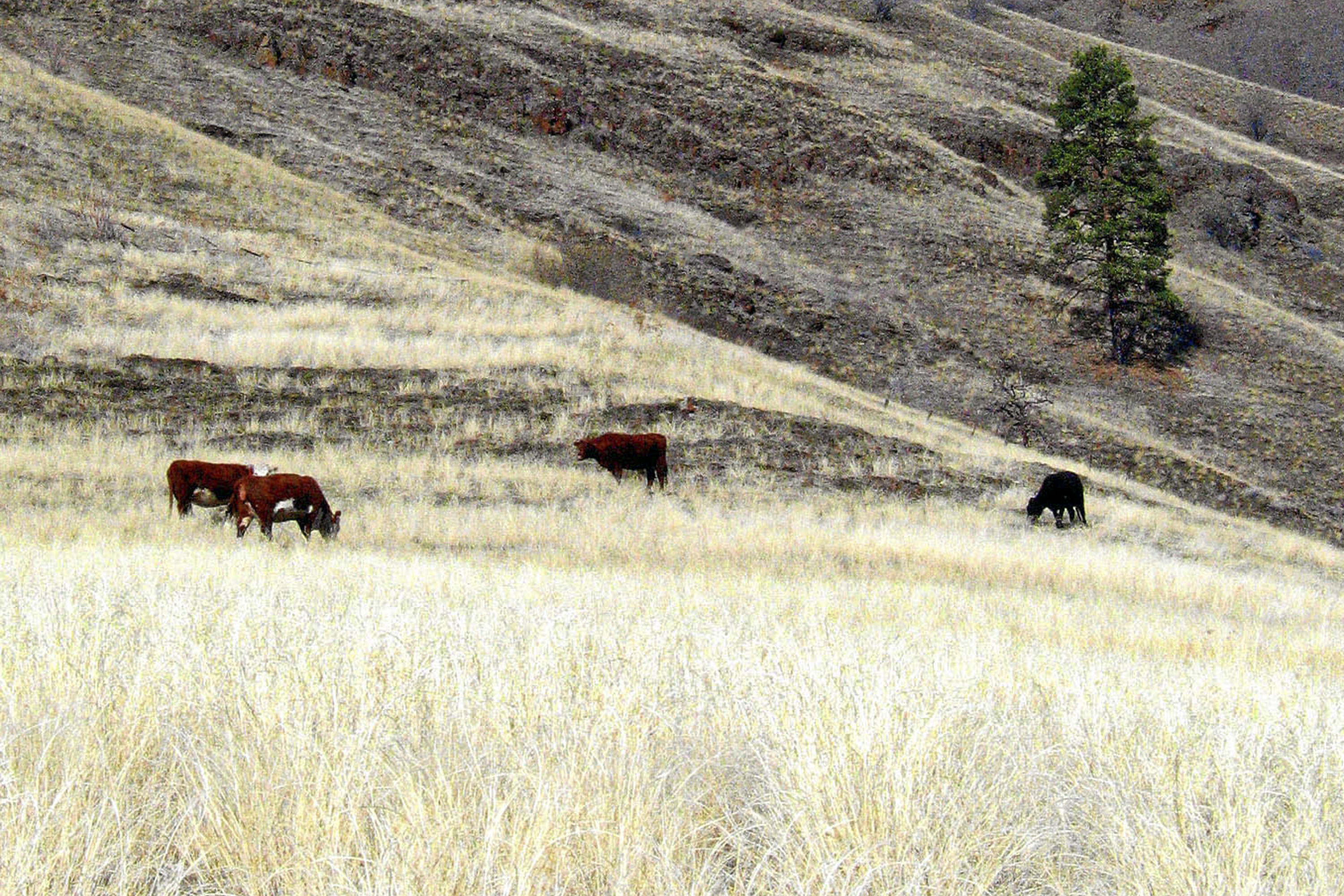 Group sues US for details about impact of grazing program