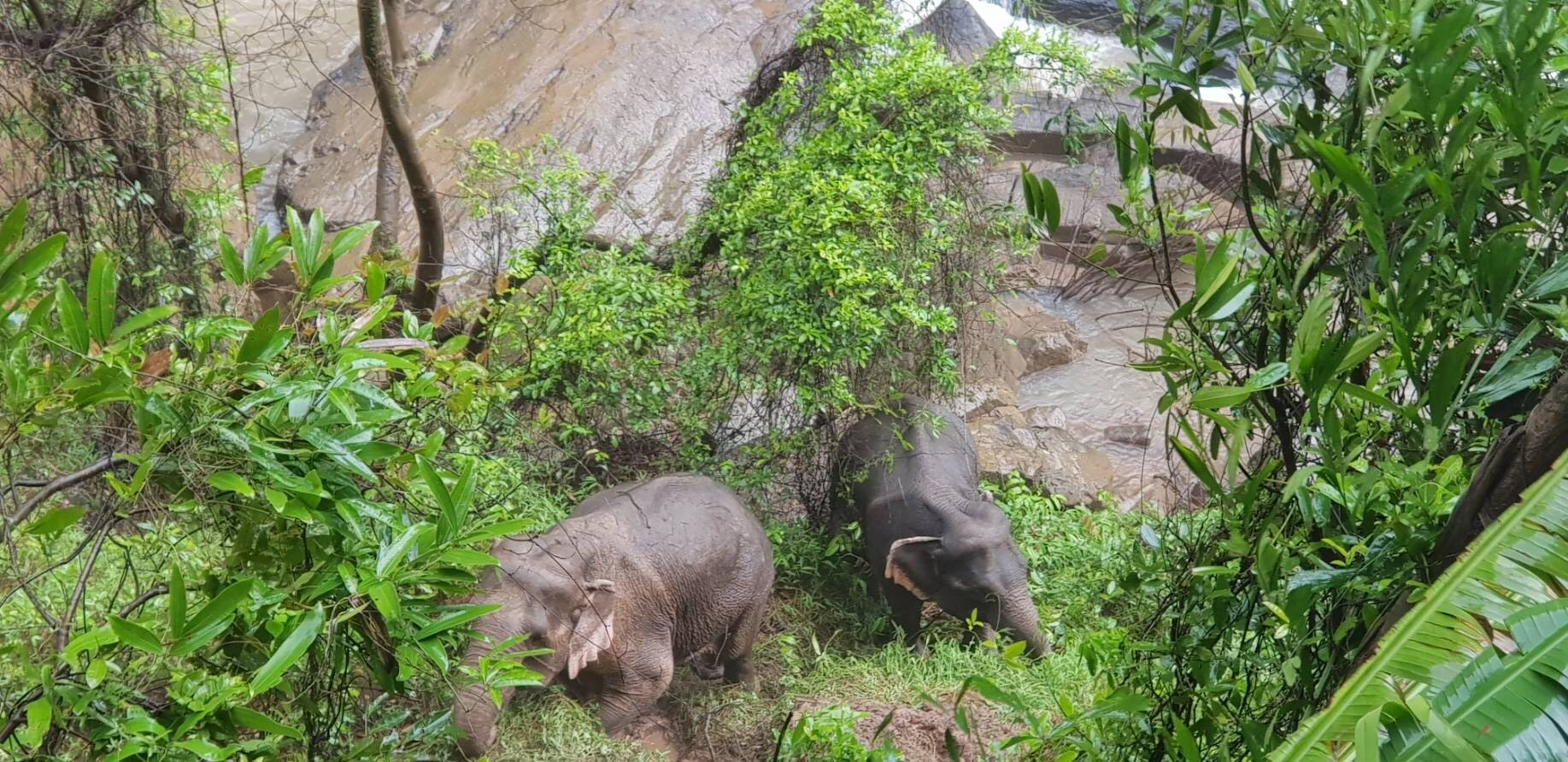 More dead wild elephants found at Thai waterfall; toll at 11