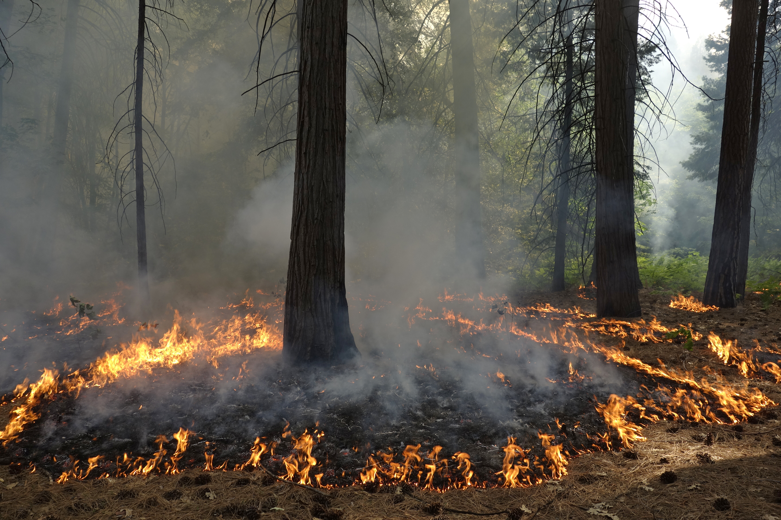 Fighting fire with fire underused in US West despite goals