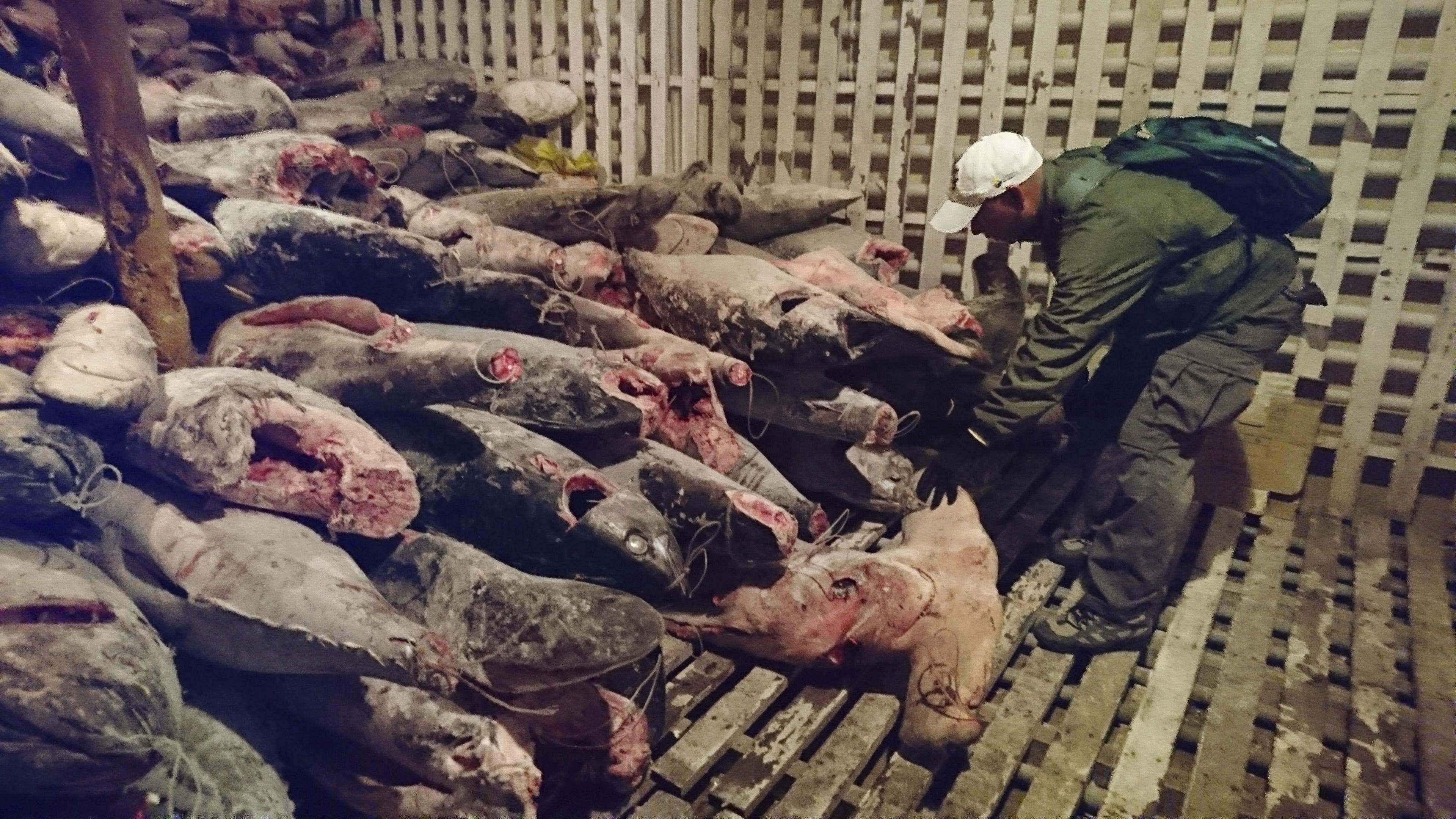 260 Chinese boats fish near Galapagos; Ecuador on alert