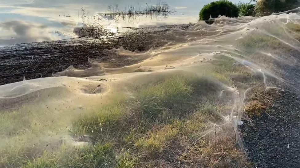 Spider Webs Blanket Eastern Victoria After Floods in Australia