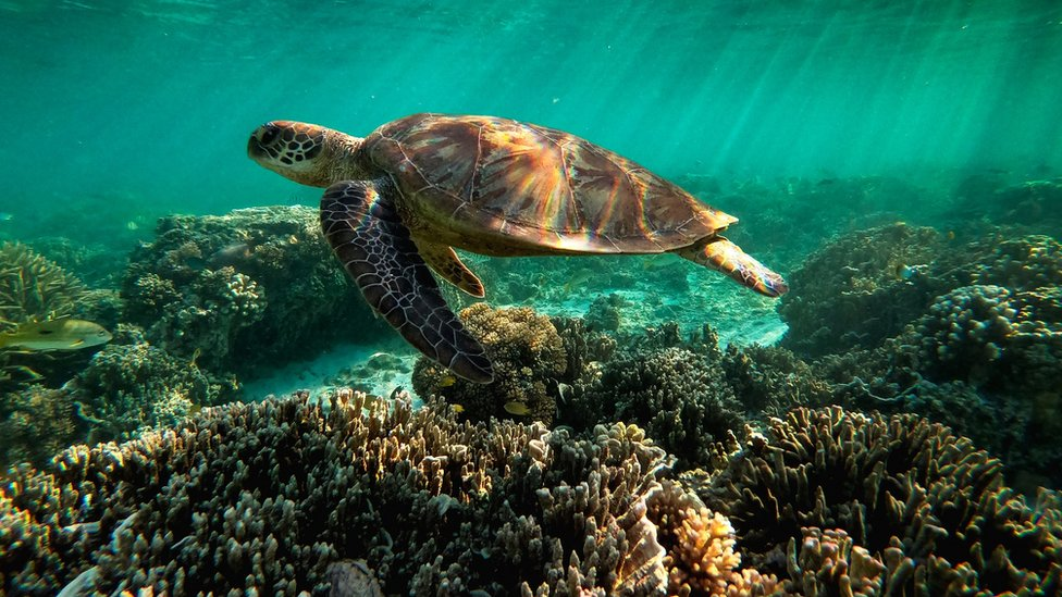 Why is the Great Barrier Reef in trouble? A simple guide; Frances Mao; BBC