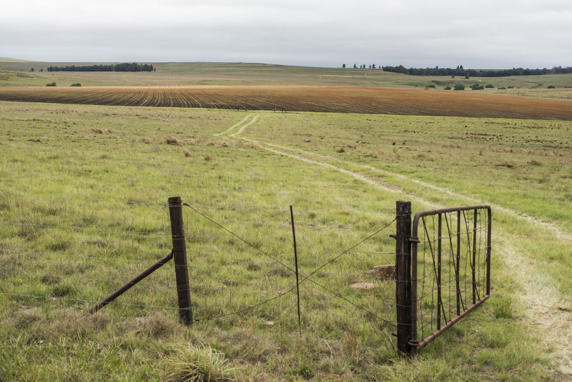 Land Panel Report Highlights Rifts That Divide South Africa