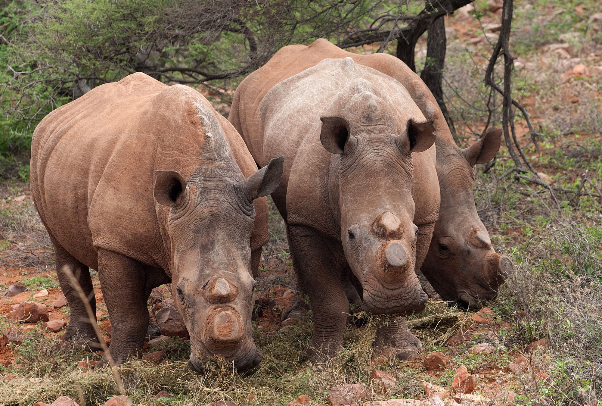 Southern African Nations Threaten to Leave Global Wildlife Pact