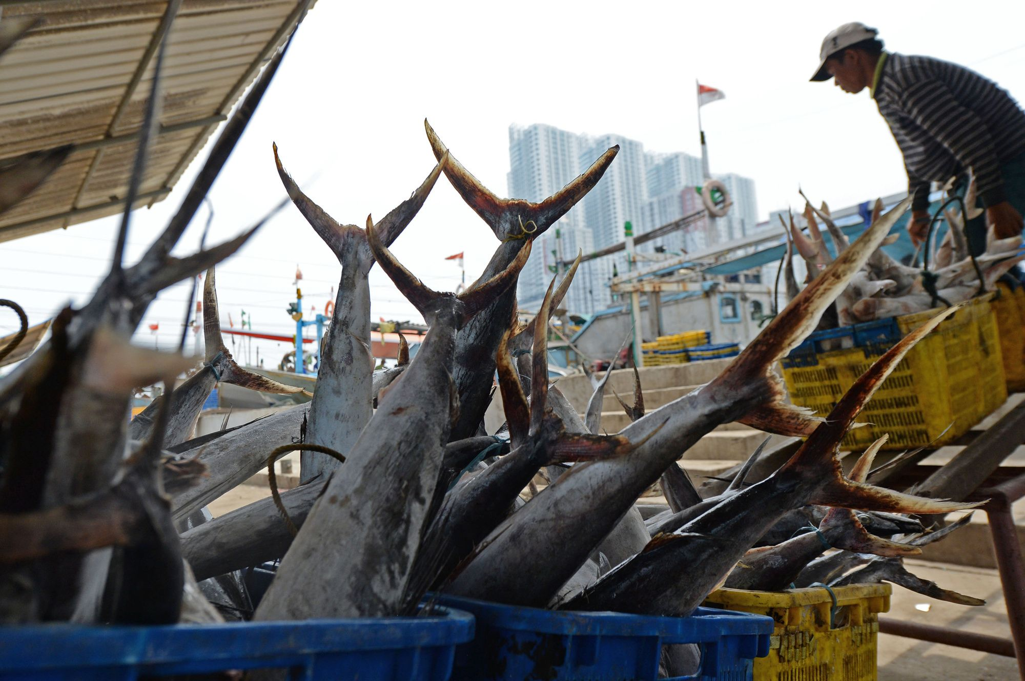 Indonesia Steps Up Sea Patrols to Monitor China Fishing Boats