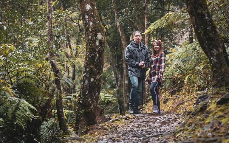 比起宅在家發呆,有越來越多人選擇親近山林,沈浸在芬多精的包圍之中。