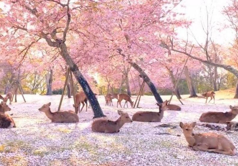 奈良如仙境般美麗的畫面