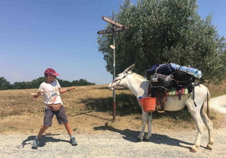 在旅程中幫忙駝運行李的驢子