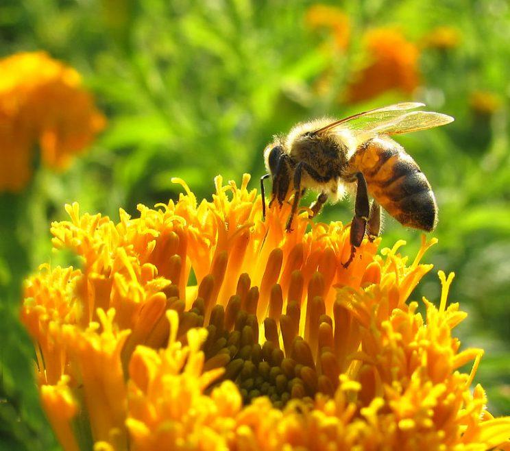 Qué pasará con la economía si desaparecen las abejas