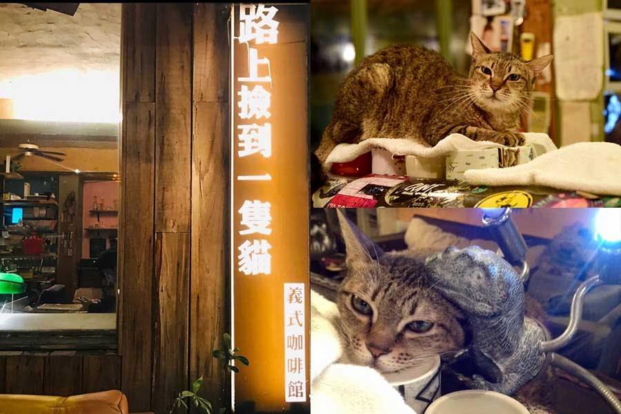 深夜咖啡廳 路上撿到一隻貓|美周報