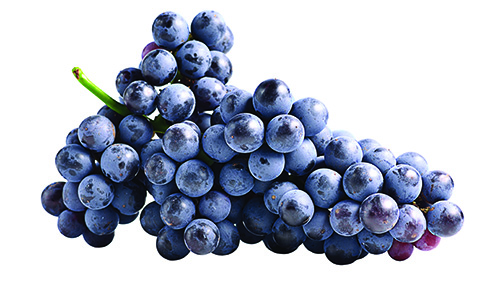 Dark grapes, Isolated on white background; Shutterstock ID 299697119; Notes: duel