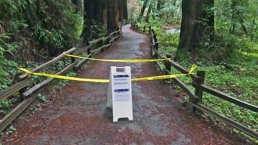 Massive redwood tree falls and kills hiker in California park