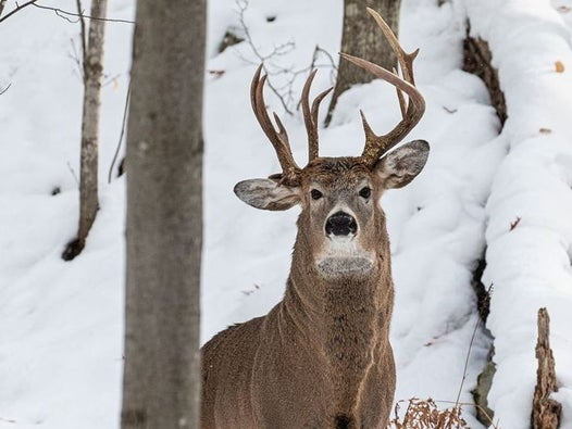 One-in-a-million deer with three antlers spotted caught on camera