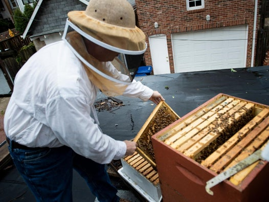 Beekeepers are suing Trump administration over decision to allow wider use of insecticides